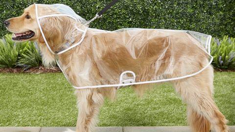 Frisco Clear Dog Raincoat