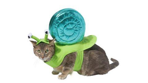 Frisco Snail Dog & Cat Costume