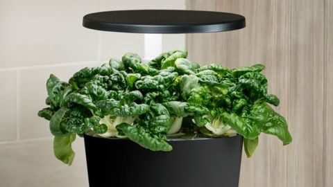 Aerogarden Harvest 360 Indoor Garden