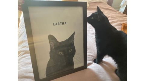 West & Willow Custom Cat Portrait