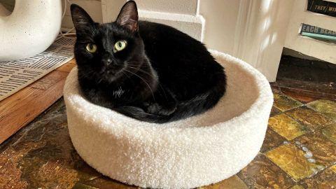 Tuft + Paw Kip Cat Cushion