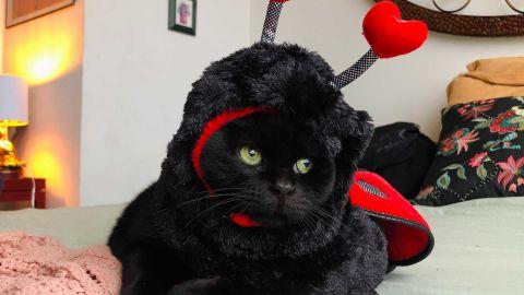 Frisco Ladybug Dog & Cat Costume