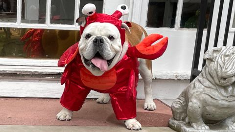 Hyde & EEK! Boutique Lobster Frontal Dog and Cat Costume