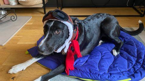 Rubie's Costume Company Pet Aviator Hat and Scarf Set