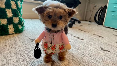 Frisco Front Walking Granny Dog & Cat Costume