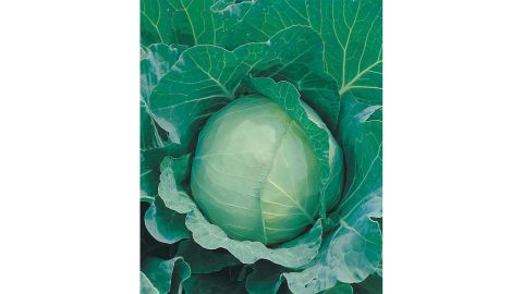 Cabbage, January King or Golden Acre